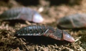 Bug-1975_16